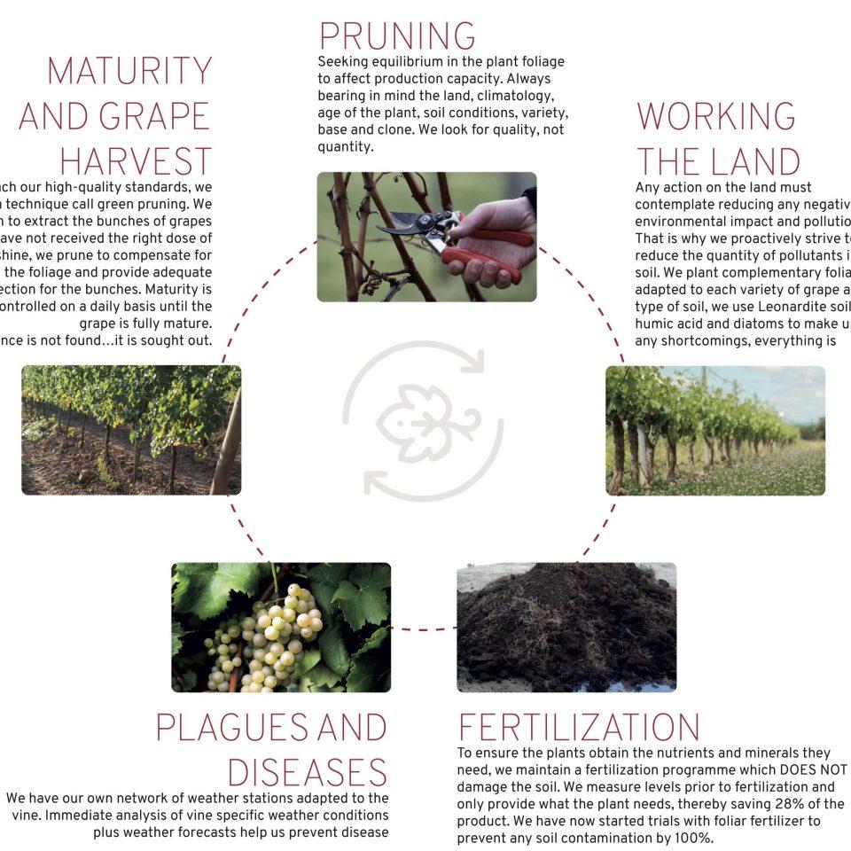 viticultura-esquema2-angles-min